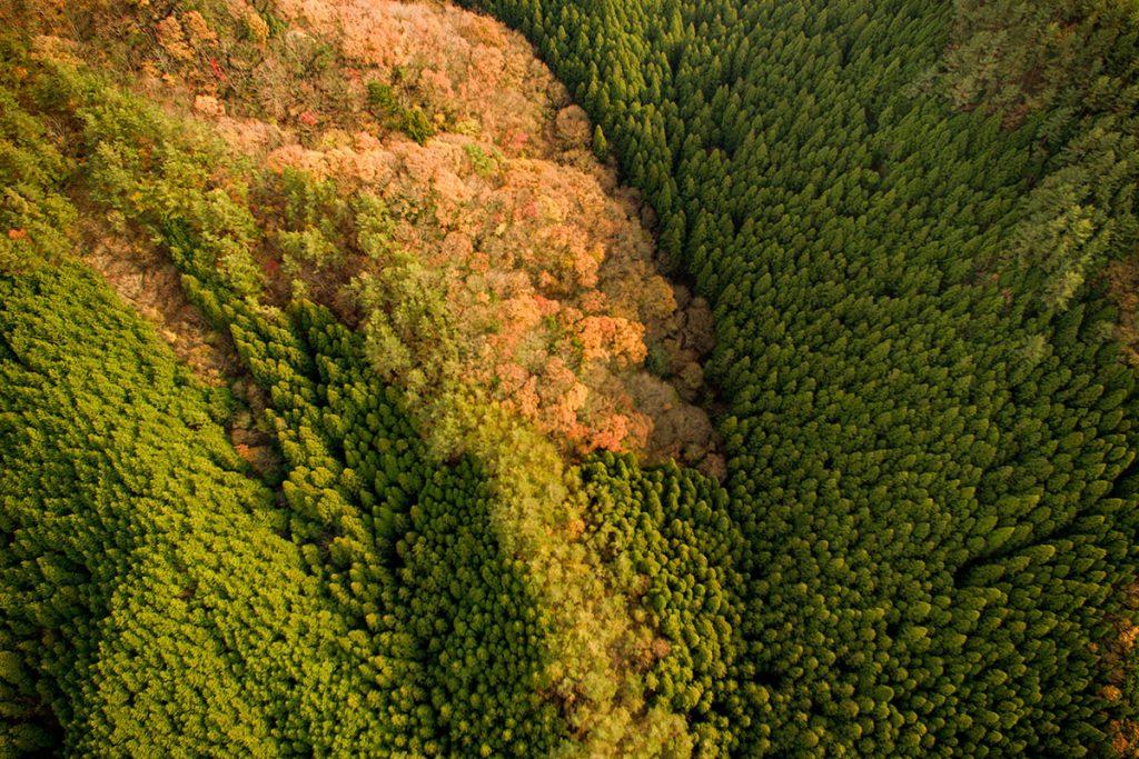 羅漢峡近くの山林