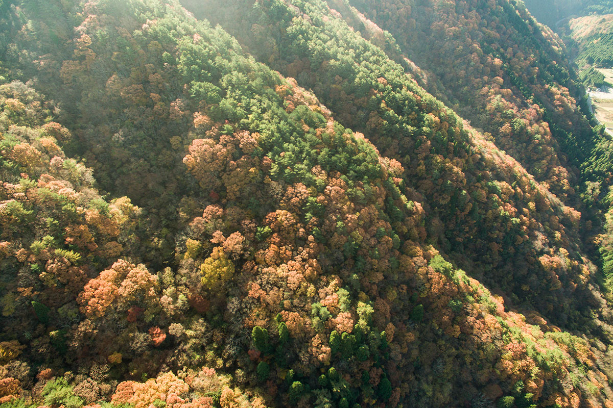 安芸太田町の山林