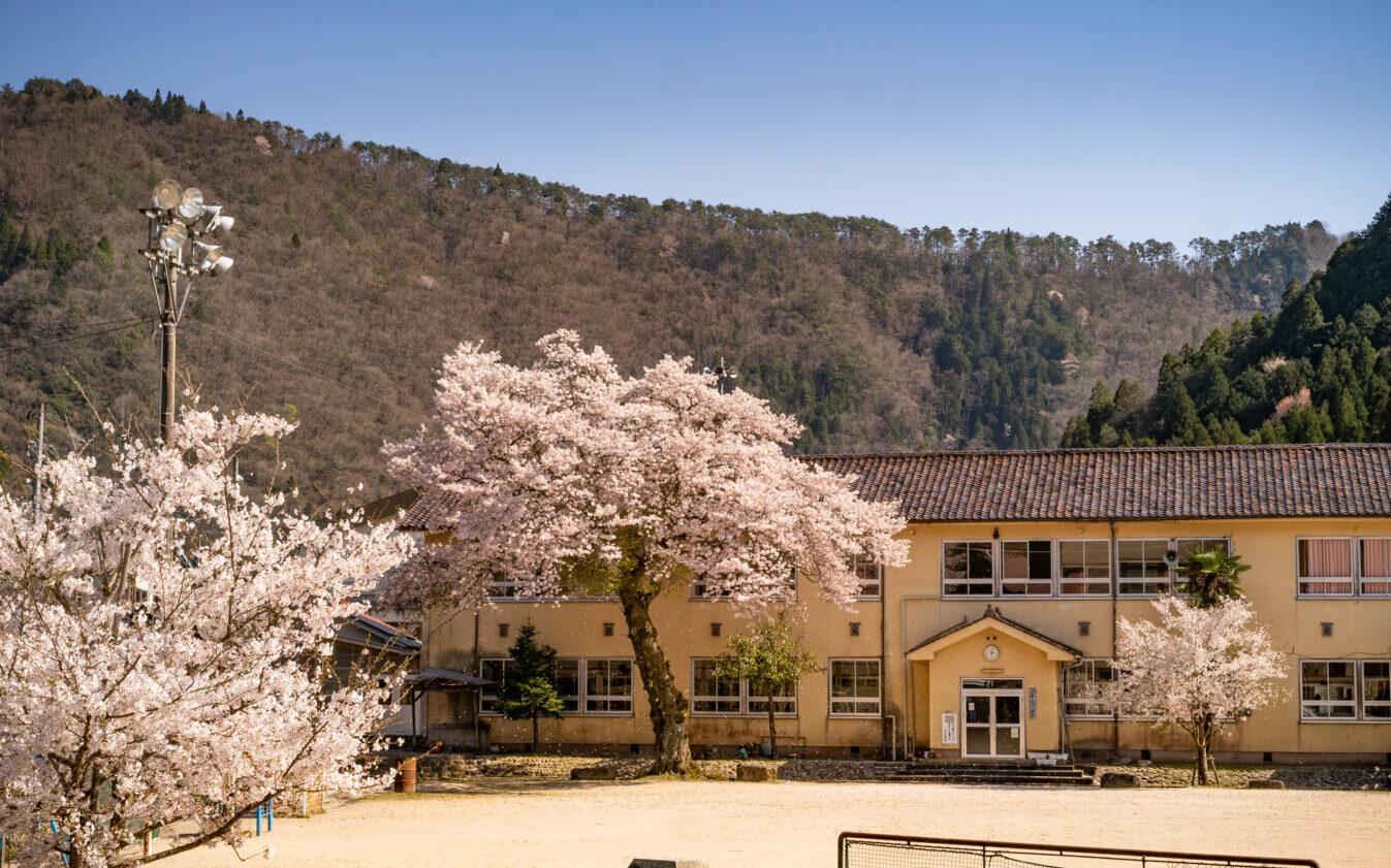 Forema 廃校の桜